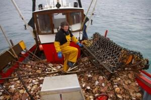 La pêche à la coquille saint jacques Erquy
